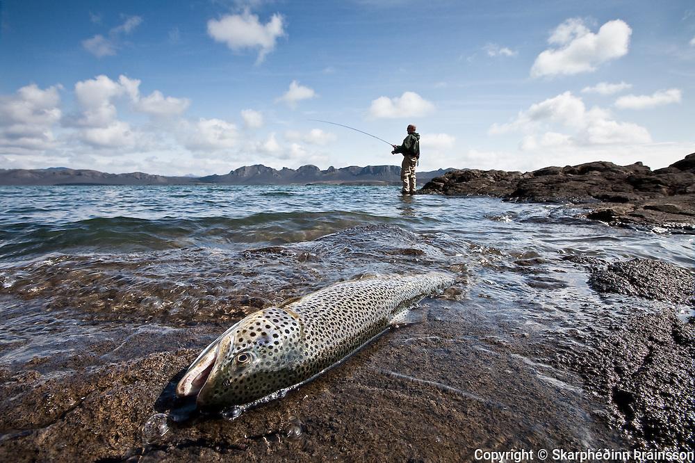 Brown trout fishing in Veiðivötn, central highlands Iceland