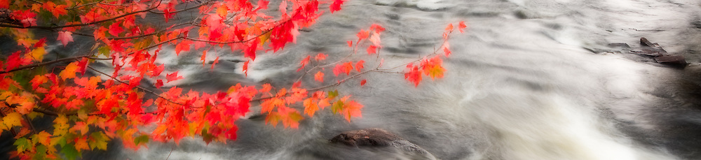 An Orton effect was applied to this photograph of the Oxtongue River taken in the fall, with bright red Maple leaves adding interest in the foreground.  This is a crop of a larger photograph.