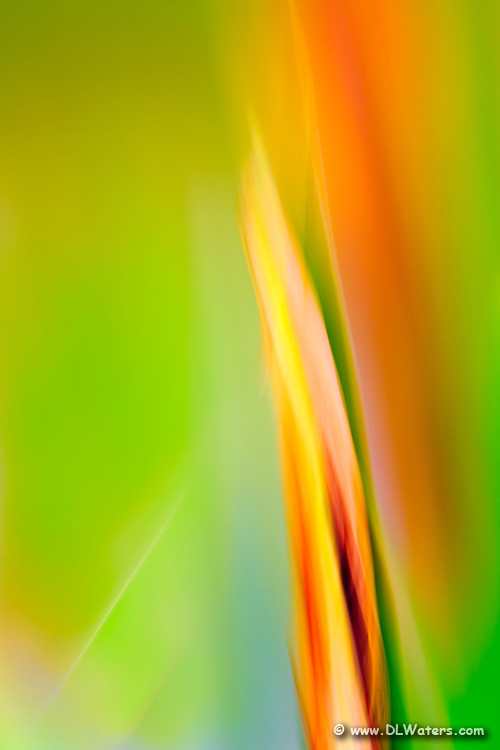 Impressionistic photo of iris buds in the garden created by moving the camera while the shutter was open.<br /> It is very  easy to use camera motion while photographing close-up or macro subjects to create an impression. If the subject is moving in the wind or if you don't have a tripod, it doesn't matter. Moving the camera while the shutter is open is a great technique to use when the light is low and shutter speeds are between 30th of a second through 1 second.  The more magnification you have the faster the shutter speed can be and still show camera motion blur. There are a lot of variables so take a whole bunch of photos varying the speed you move the camera and the shutter speed.