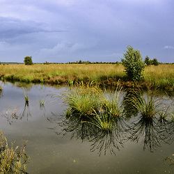 Fochteloërveen, Natuurmonumenten, Drenthe,  Fryslan, Netherlands