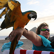 On the Oregon coast at Pacific City, a woman shares the evening with her macaw. they are on the beach near Haystack Rock.