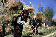 kids havesting crops in tajikistan