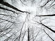 Trees in Nature