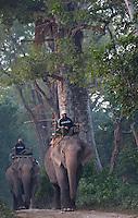 Mahouts riding their elephants, Bardia National Park, Nepal