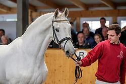 Calido I<br /> Klein Offenseth - Hengstschau Stall Hell 2020<br /> © www.sportfotos-lafrentz.de/Stefan Lafrentz