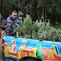 Toluca, México.- Los árboles de navidad que fueron utilizados en territorio mexiquense comienzan a llegar a centros de acopio  ubicados en diversos puntos del Valle de Toluca, y son enviados a ser triturados para convertirse en composta que será utilizada para pequeños árboles que serán plantados posteriormente.  Agencia MVT / Crisanta Espinosa