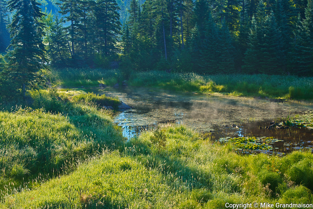 Wetland in morning light<br />