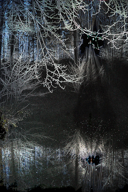 Forest abstract - mirroring in pond.
