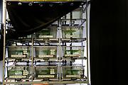 [M] Textlable hav been digitally removed!  Institute of Molecular Pathology (IMP) in Vienna, Austria   Paarungstanks hinter einem schwarzen Vorhängen, damit die Tiere Ruhe haben bei der Spermatophoren übergabe und dem Eier ablegen. Forschungsinstitut für Molekulare Pathologie (IMP) in Wien, Österreich