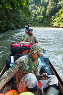 Rimbang Baling Wildlife Sanctuary, Sumatra, Indonesia, August 2017. WWF  tiger research programme coordinator Febri A. Widodochecks his GPS for the right insertion point into the rainforest. International volunteers of Biosphere Expeditions work together with local scientists of the WWF project to  protect the Sumatran Tiger. The 'citizen scientists' survey the rainforest on foot and in boats, looking for tracks, kills, scats and the animals themselves, and setting camera traps. They also work with local people on capacity-building and creating local incentives for tiger conservation. All this in an effort to mitigate human-wildlife conflict and create strategies to ensure the survival of the critically endangered Sumatran tiger into the future. Photo by Frits Meyst / MeystPhoto.com