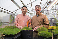Yanqi Yu and Dennis Martin discuss the release of a new breed of bermudagrass, Tahoma 31