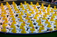 Yellow plastic ducks floating in a carnival game at the Bangor State Fair, Maine.