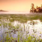 A misty sunrise in summer on Damariscotta Lake. Nobelboro, Maine