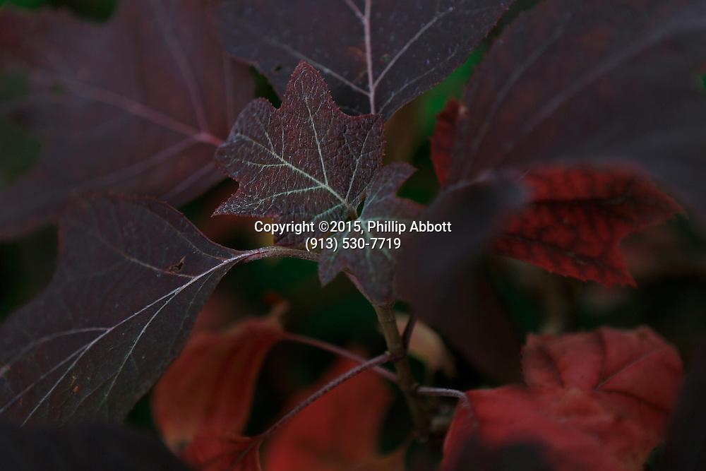 09 October, 2015<br /> &copy;2015, Phillip Abbott<br /> Apex Photographic