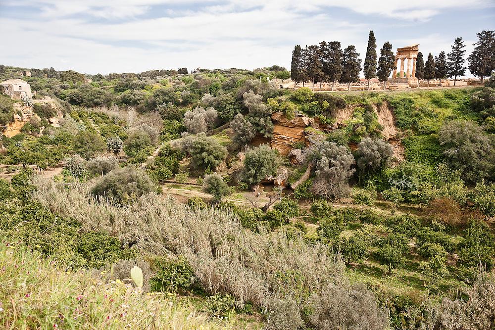 Agrigento, Valle dei Templi. Il tempio di Castore e Polluce sormonta il Giardino della Kolymbetra. Proprietà FAI.  ©2012 Vince Cammarata   FOS