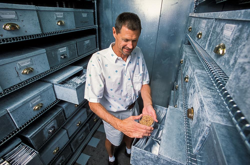 Kansas, USA - Wheat Genetics Resource Center (seed bank) at K State , John Raupp with seeds