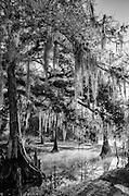 everglades gallery johnbobcarlos johnbob florida pines