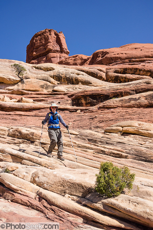 A hiker crosses a sandstone bench on Lost Canyon Trail in Needles District of Canyonlands National Park, Utah, USA. The Permian rocks of the Needles District formed where red alluvial fans from the east interwove with white dunes from the west, making spires striped red and white.