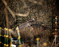 Randy deer??? Image taken with a Nikon D5 camera and 600 mm f/4 VR lens.