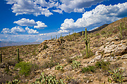 The Sonoran Desert along the Tanque Verde Ridge Trail in Saguaro National Park, Arizona