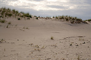 Footprints of beachgoers can be seen between American Beachgrass covered dunes at Island Beach State Park, New Jersey.