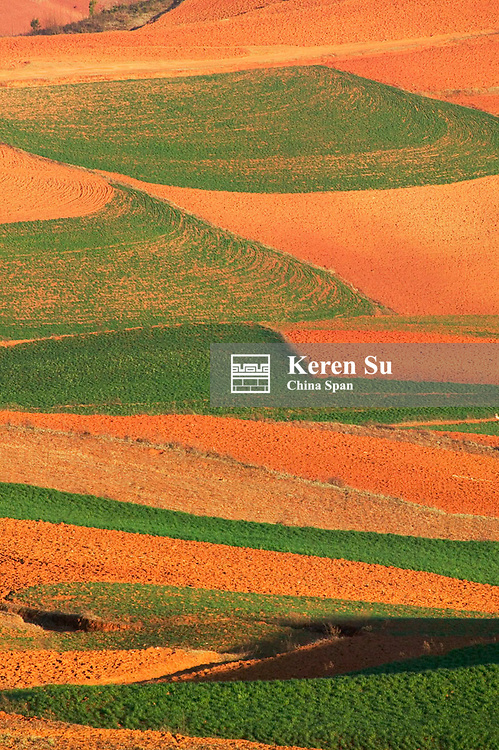 Red soil land with green winter wheat field, North Yunnan, China, 2005