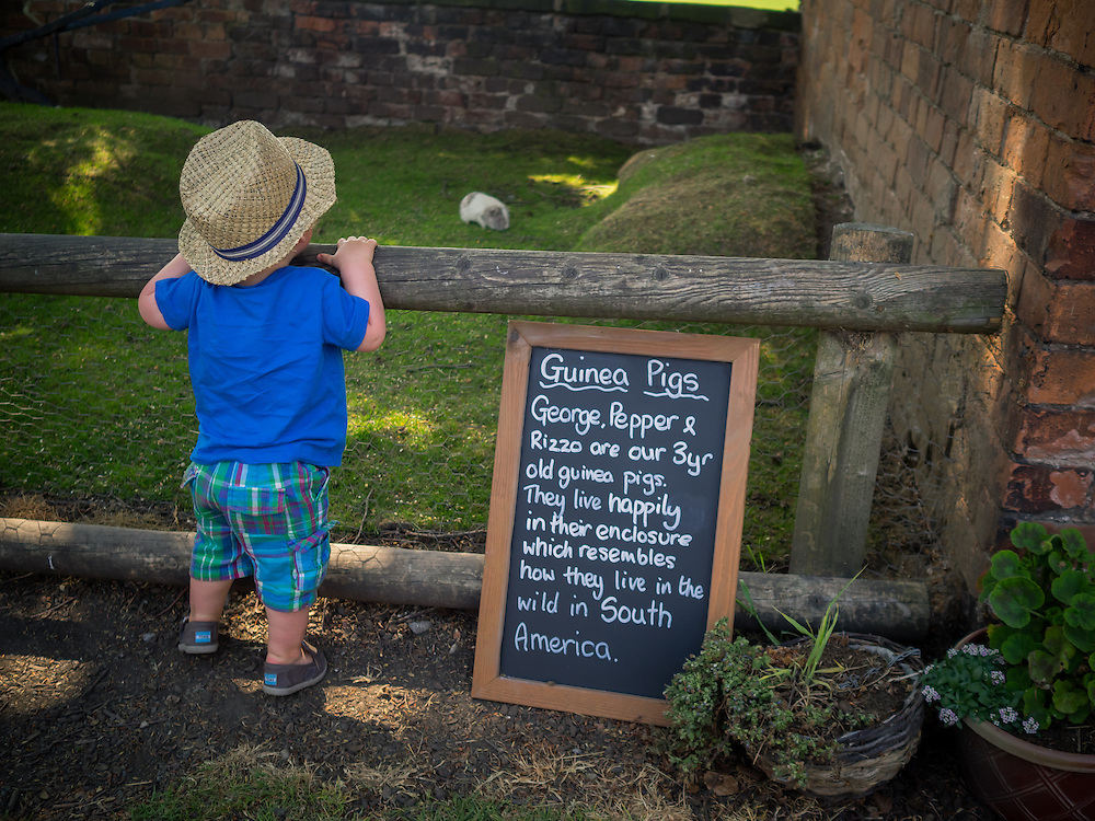 PR photography on Open Farm Sunday for Riverside Organics in Cheshire by Ioan Said Photography