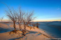 Sunrise bathes the trees in morning light at Monahans Sandhills State Park.<br /> <br /> Available Sizes: 7x11, 13x19, 16x24