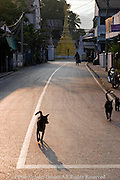 Dogs are running on a street near a Buddhist temple in Mae Sariang, Thailand.