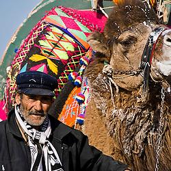 Turkish man with camel ready to fight, Ayvalik, Turkey, Asia