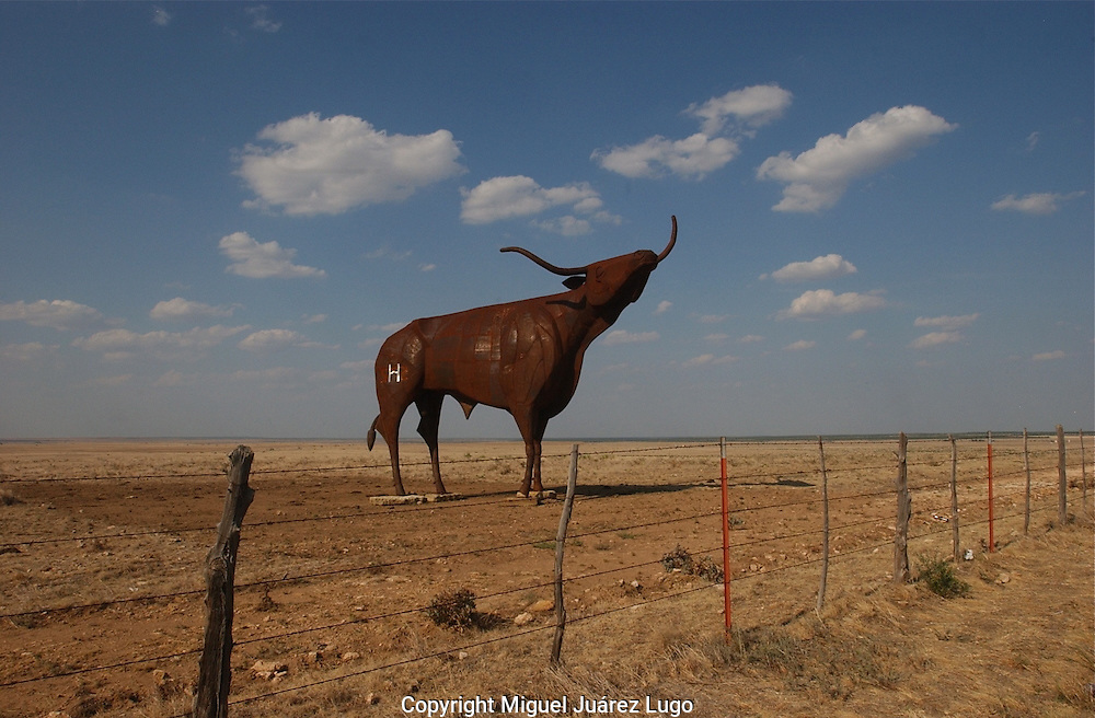 A sculpture of a longhorn bull stands in a ranch in Throck morton County, Texas. (PHOTO: MIGUEL JUAREZ LUGO).