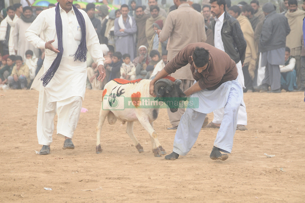 December 12, 2016 - Rawalpindi, punjab, Pakistan - Villagers watch sheep fighting each other to annual sheep fighting festival in ponawala on the 350 km outskirts of rawalpindi,people and Farmers at a village county rounded up their finest fighting sheep and gathered among friends to cheer on the creatures as they violently rammed into each other until their horns fell off. The Small-tail Han Sheep, known for their head-butting abilities, battled it out in front of hundreds of onlookers who were able to distinguish the animals by their drawn-on marks.The sheep were then divided according to age and weight in the single-elimination match. (Credit Image: © Zubair Abbasi/Pacific Press via ZUMA Wire)