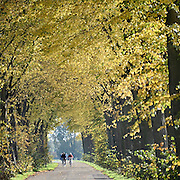 Nederland, Heumen, 24-10-2013Fietsers op de fiets door een bomenlaan op een mooie dag in de herfst.Foto: Flip Franssen/Hollandse Hoogte