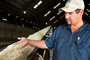 15 NOVEMBER 2005 - FRANKLIN, LA: REGGIE HEBERT, the warehouse foreman at the St. Mary Sugar Co-Op Mill checks raw sugar coming into the warehouse near Franklin, Louisiana during the 2005 sugar cane harvest. Sugar mills across Louisiana are being forced to warehouse tens of millions pounds of raw sugar because the sugar refineries in New Orleans are closed because of damage from Hurricane Katrina. The refineries are scheduled to reopen in late 2005. Louisiana is one of the leading sugar cane producing states in the US and the economy in southern Louisiana, especially St. Mary and Iberia Parishes, is built around the cultivation of sugar. The mill employs about 180 people. The two mills near Franklin contribute about $150 million (US) to the local economy. Sugar growers in the area are concerned that trade officials will eliminate sugar price supports during upcoming trade talks for the proposed Free Trade Area of the Americas (FTAA). They say elimination of price supports will devastate sugar growers in the US and the local economies of sugar growing areas. They also say it will ultimately lead to higher sugar prices for US consumers. PHOTO BY JACK KURTZ