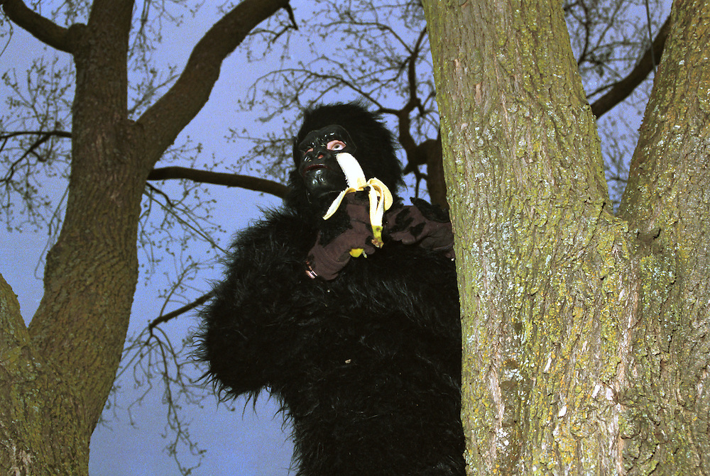 Monkey suited person in a tree eating a banana.
