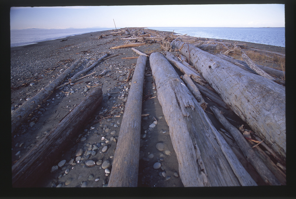 Dungeness Spit, Dungeness National Wildlife Refuge, Olympic Peninsula, Washington, US