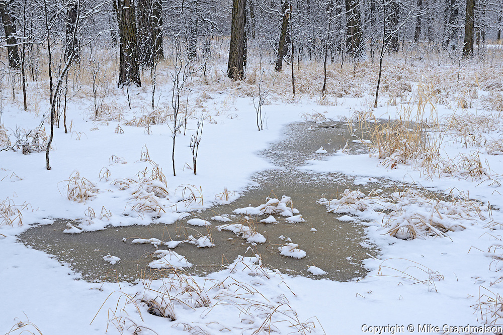 Early winter in the Seine River Forest.<br /> Winnipeg<br /> Manitoba<br /> Canada