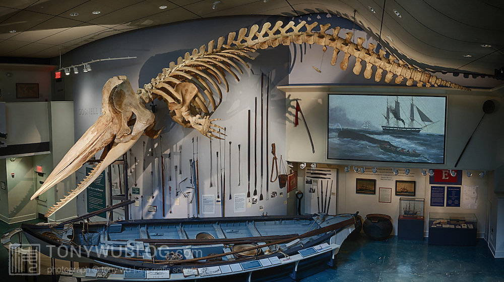Sperm Whale Skeleton And Whaling Boat Nantucket Whaling