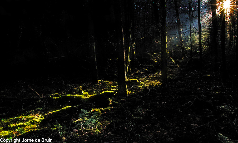 A ray of light shines through the trees to illuminate the dark forest.