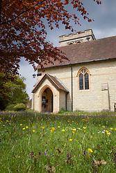 Wildflowers growing in Exbury churchyard