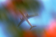Seen through garden trees, a jet airliner passes overhead in bright skies, blurred purposely using a slow camera speed.