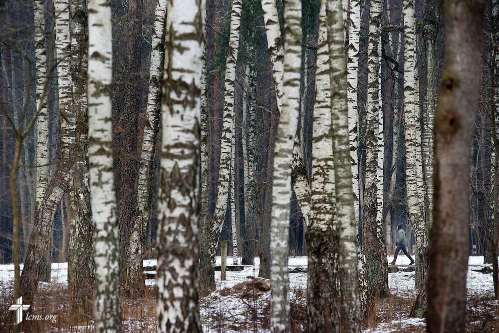 A lone walker is framed by birch trees on Wednesday, Feb. 4, 2015, in Riga, Latvia. LCMS Communications/Erik M. Lunsford