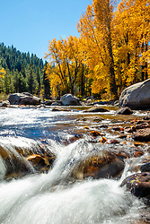 """Truckee River in Autumn 19"" - Autumn photograph of the Truckee River and yellow cottonwood trees in Downtown Truckee, California."
