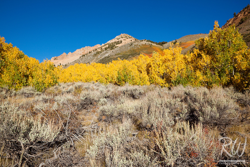 Fall Color Near North Lake - Bishop Creek Canyon, Inyo National Forest, California
