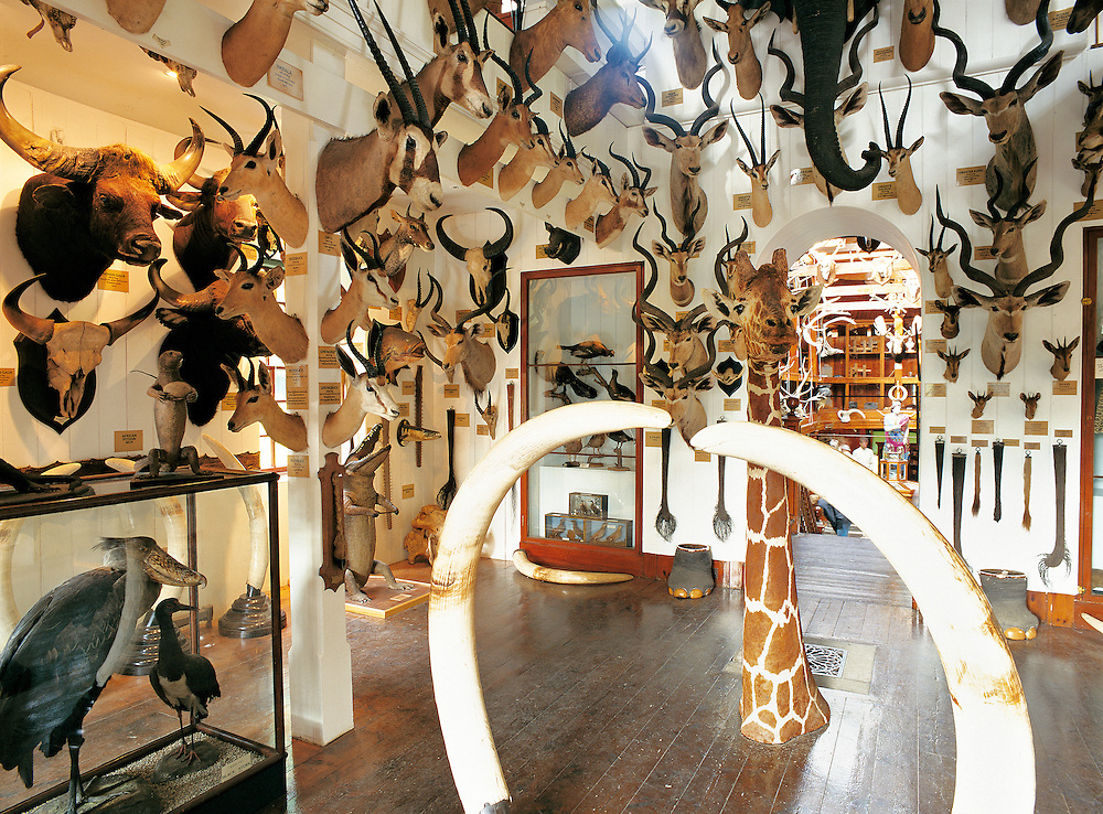 Hunting trophy collection, Dunrobin Castle, French style home of the Duke of Sutherland. Highland region, N.E. Scotland, UK
