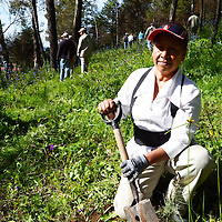 METEPEC, Mexico.-  Asociaciones civiles, vecinas, vecinos y autoridades municipales de Metepec, participaron en la jornada de reforestación en el cerro de los magueyes, más de 500 personas participaron en la plantación de dos mil pinos de dos variedades adecuadas a este lugar. Agencia MVT. José Hernández.  (DIGITAL)