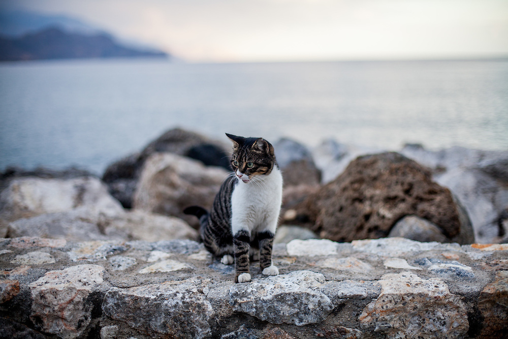 A cat sitting at The Lybian Sea Coast in Palaiochora during the low season, normally hundreds of tourists are walking the shore during the high season. Palaiochora is a small town in the Chania regional unit on the island of Crete, Greece. It is located 77 km south of Chania, on the southwest coast of Crete and occupies a small peninsula 400m wide and 700m long. The town is set along 11 km of coastline bordering the Libyan Sea. Its population was 1,675 in the 2011 census. Palaiochora's economy is based on tourism and agriculture (mainly tomatoes cultivated in glass houses and also olive oil).