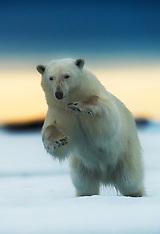 Svalbard #14 2012