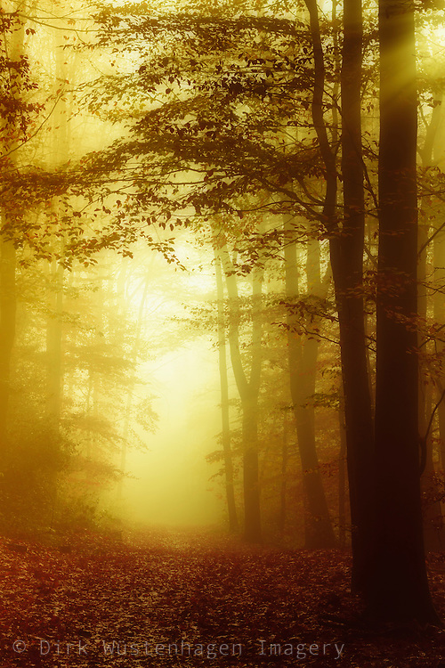 Forest on a misty day in early fall