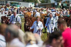 © Licensed to London News Pictures. 11/07/2018. Harrogate UK. Beef cattle championships taking place today at the 160th Great Yorkshire Show in Harrogate. Photo credit: Andrew McCaren/LNP